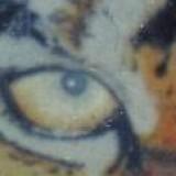 tigerdan